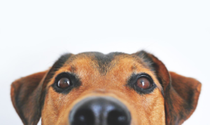 mold removal safe for pets