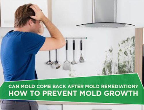 Can Mold Come Back After Remediation?
