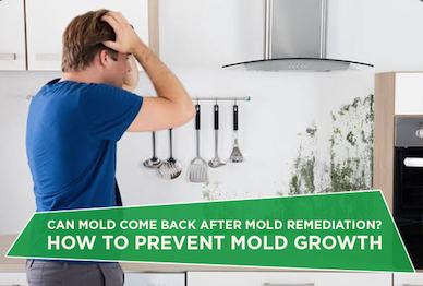 Can Mold Come Back After Remediation